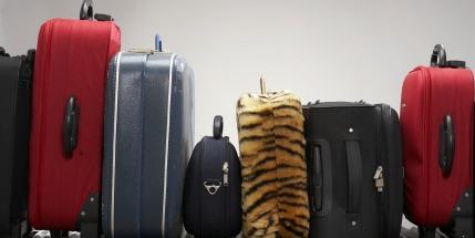 29.4 million luggage items were 'mishandled' last year alone