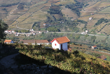 A surveyor's hut among rows of vines and the above the Douro River