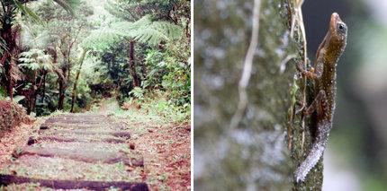 Dominica trekking