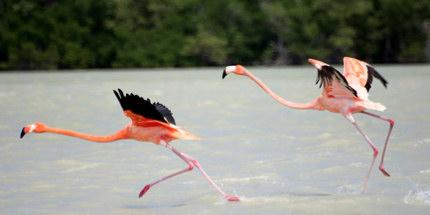 Undiscovered Mexico - Flamingos