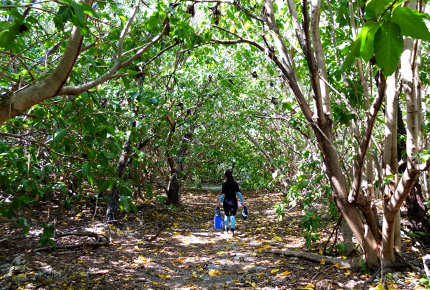 Meandering through Lady Elliot Island's regenerated forest