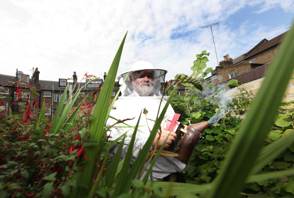 Rooftop gardens contribute to a building's performance