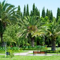 Sochi palm trees