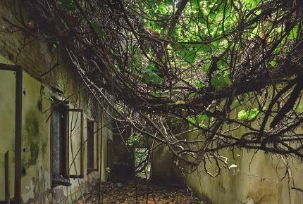 Tangled plants have taken over Venice's Poveglia Island