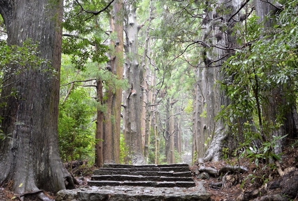The Kumano Kodō criss-crosses through the Japanese mountains