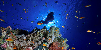 Go diving in Egypt this March