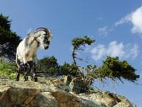 Akamas Peninsula Cyprus 200