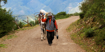 A local and his donkey ascend the Salkantay route