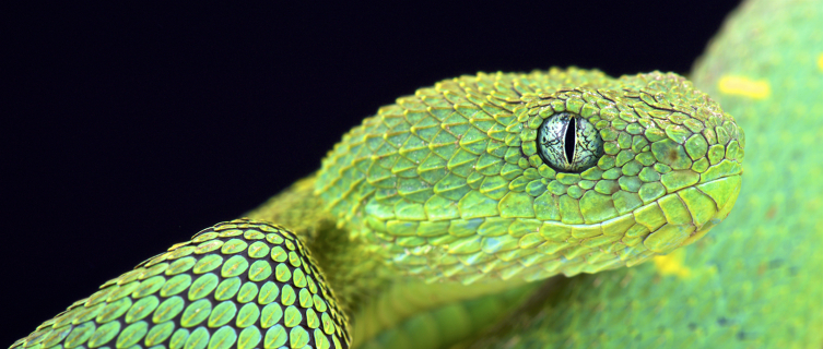 Benin has striking wildlife