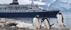 Penguins look on as a cruise ship sails by