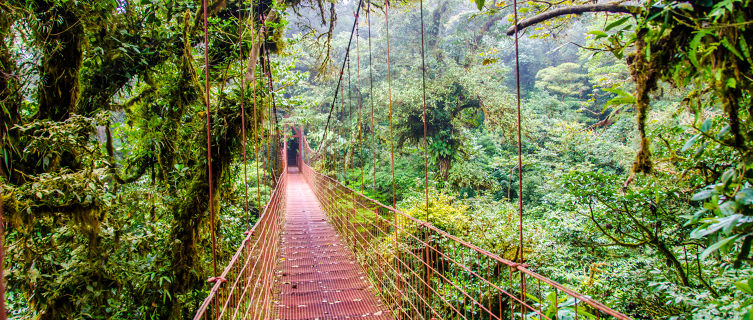 High up in the Monteverde Cloud Forest Reserve in Costa Rica