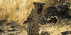 Get close to nature on a self drive safari