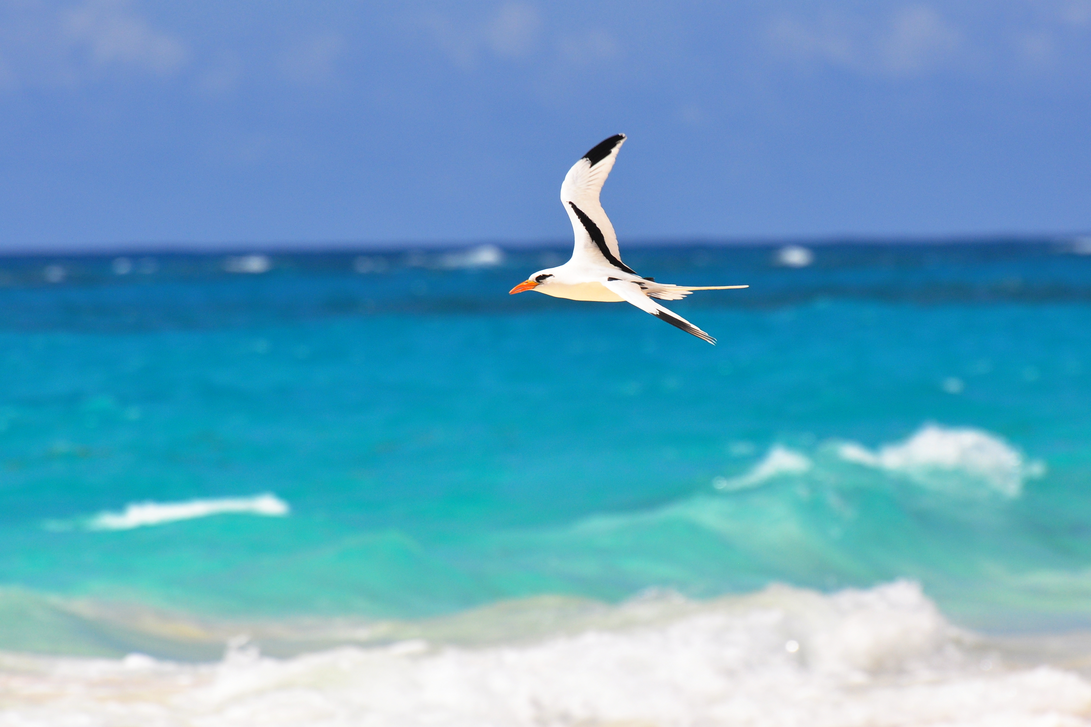 There is tropical wildlife all over Bermuda
