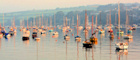 Join Falmouth's sailing fraternity