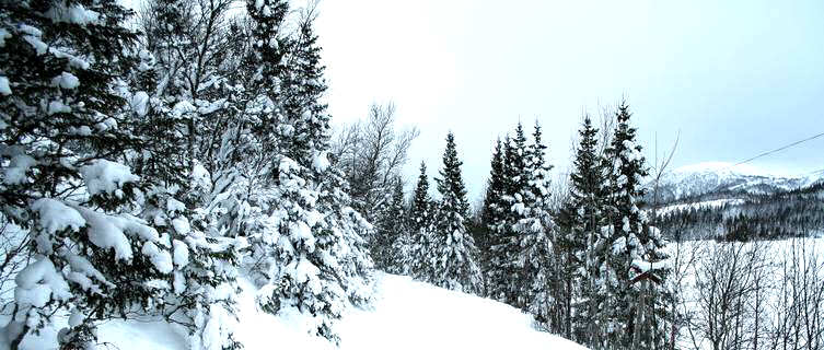 Cross-country skiing trail in Åre