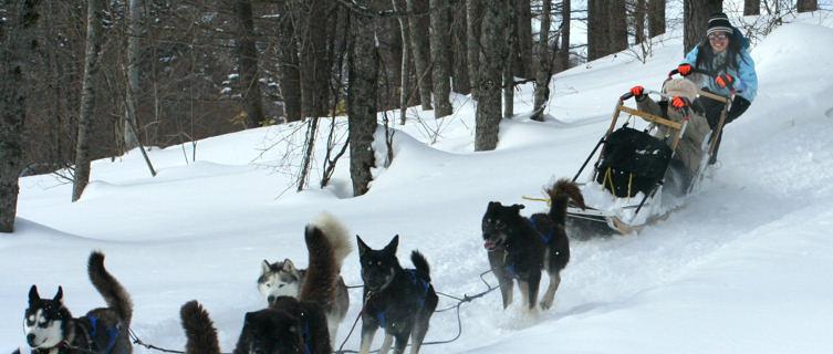 Dog sledding, Furano