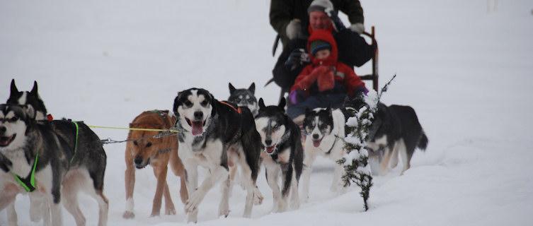 Dog sled, Riksgränsen