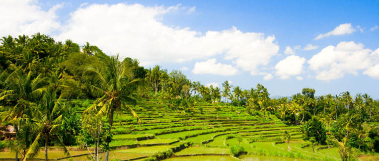 Rica terraces in Bali, Indonesia