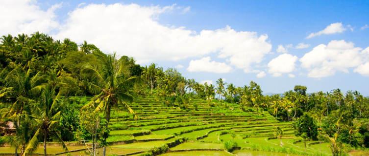 Rica terraces in Bali, Indonesia