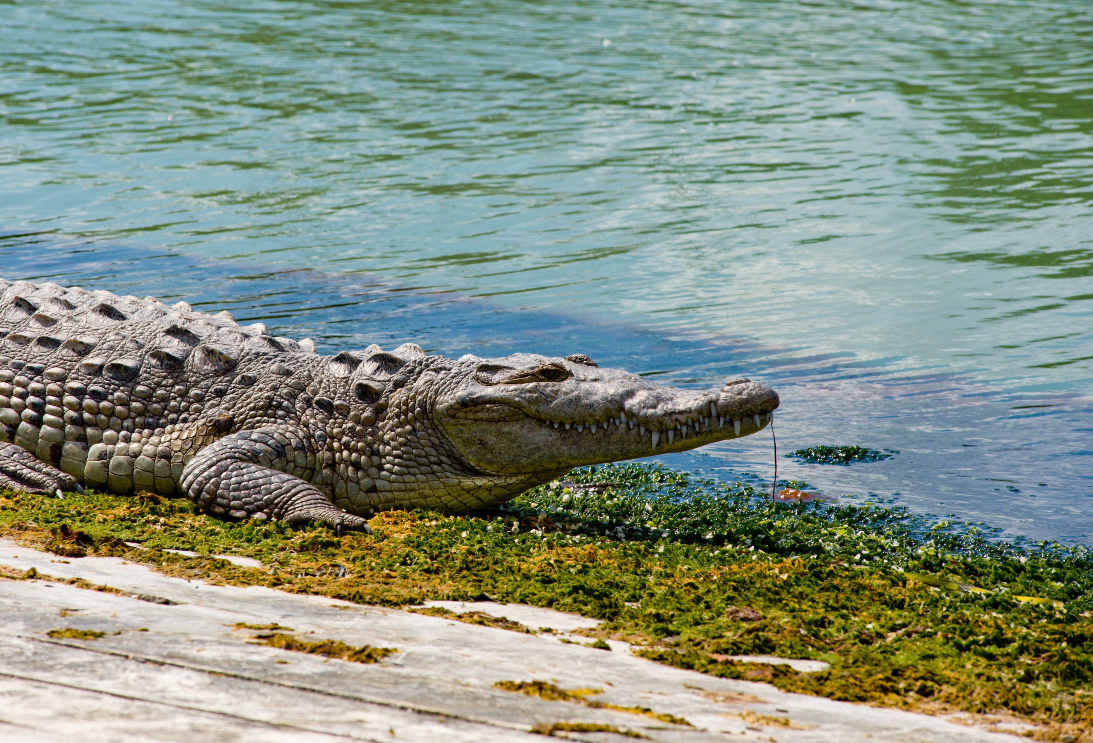 Kakadu National Park is renowned for its alligators