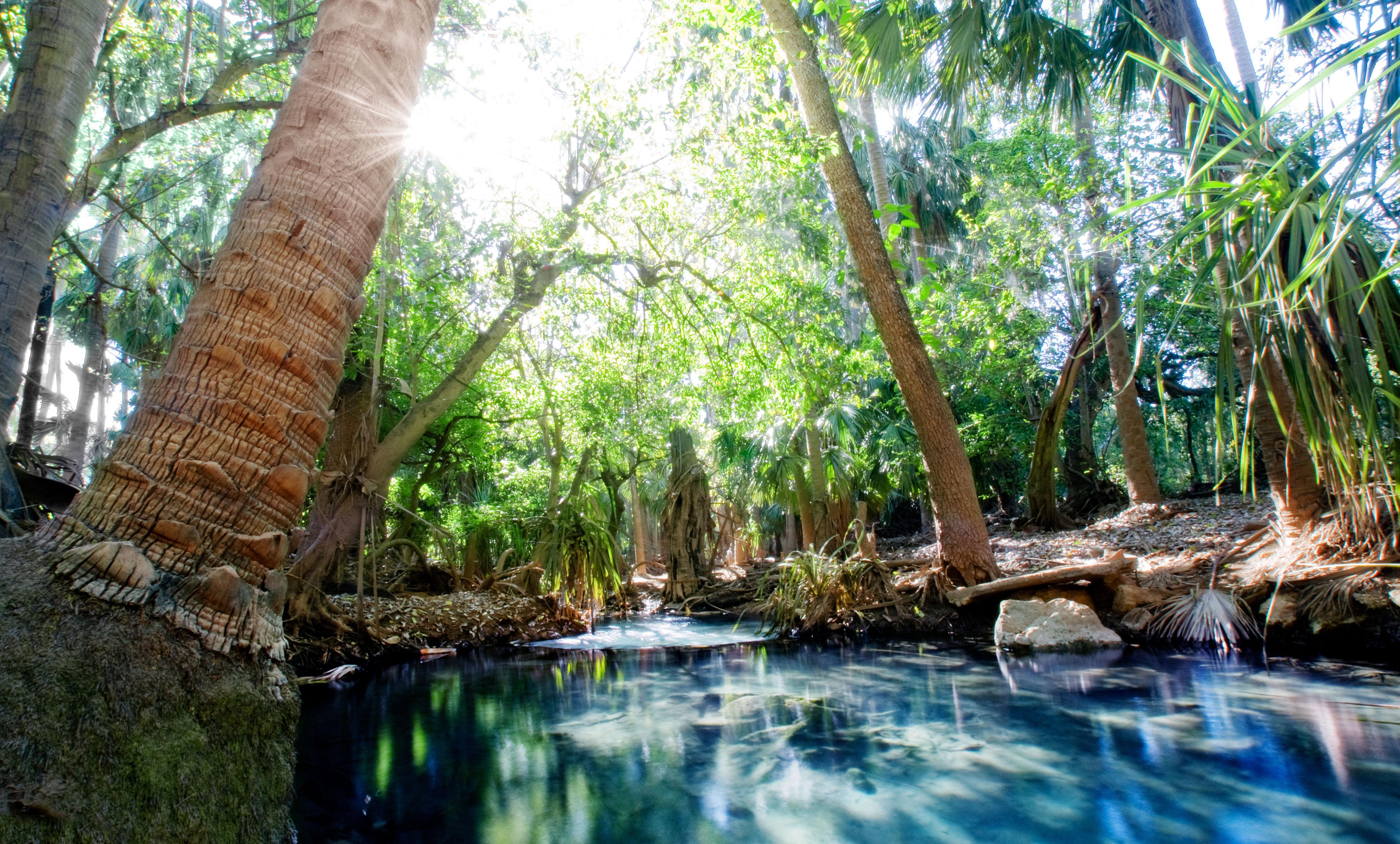 Mataranka hot springs, Northern Territory