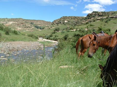 Go pony trekking in Lesotho