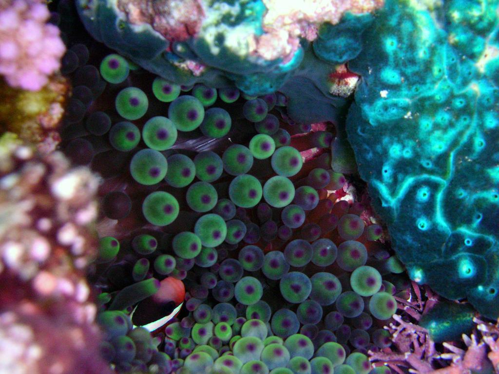 Underwater treasures, Niue