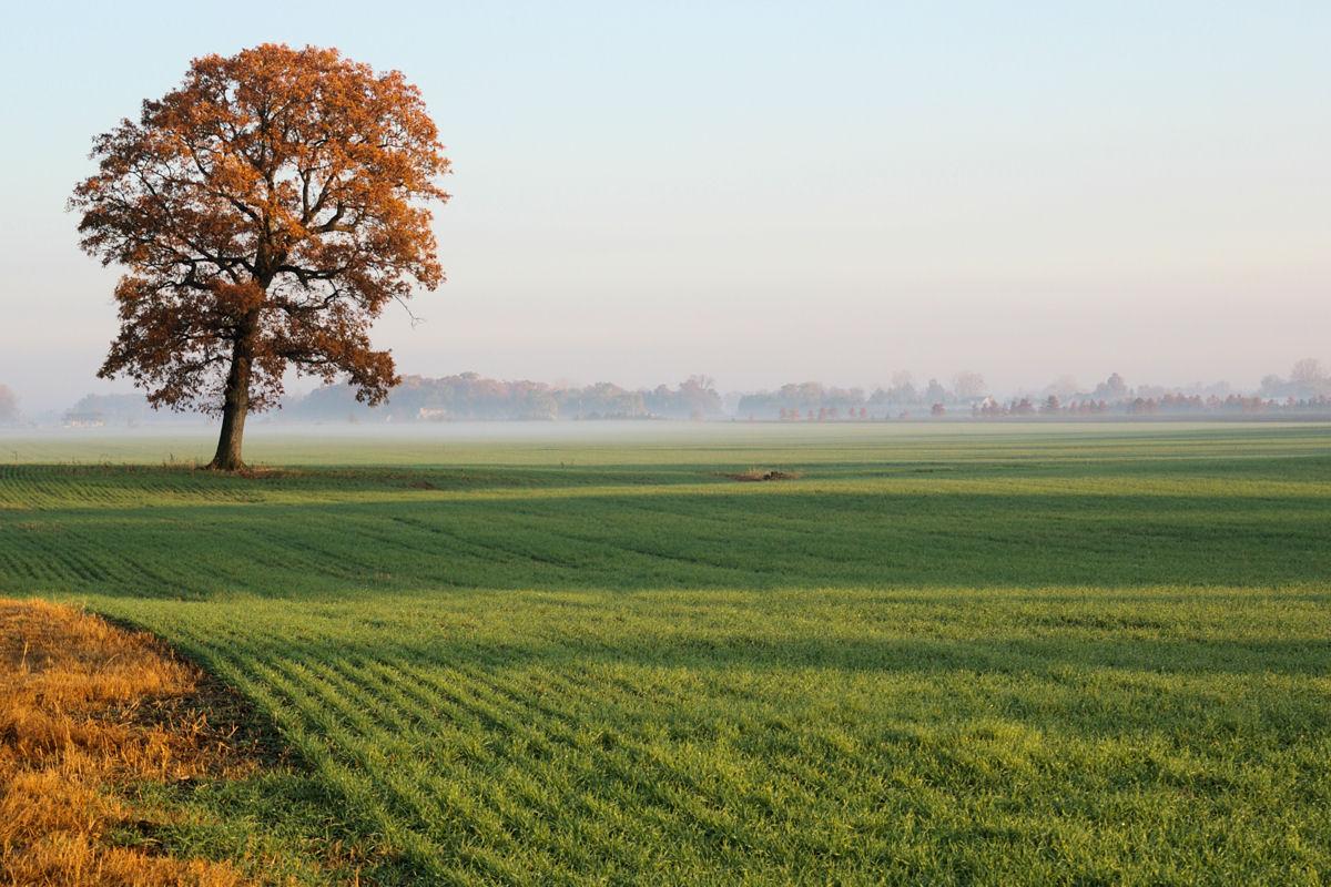 Tree-Wood County, Ohio