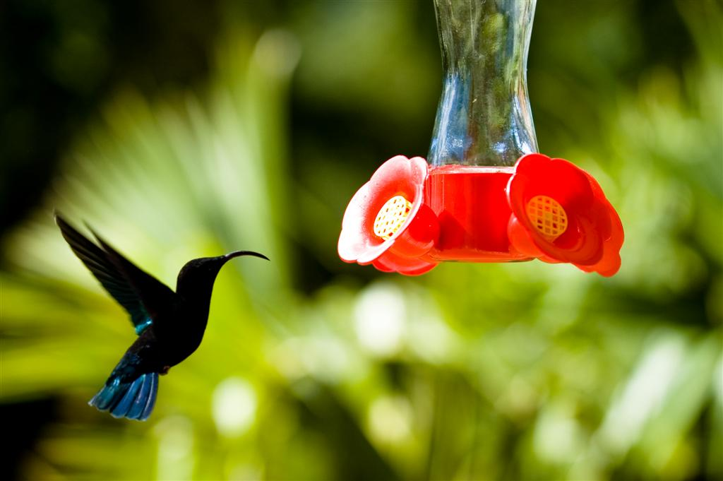 Bird life on the island