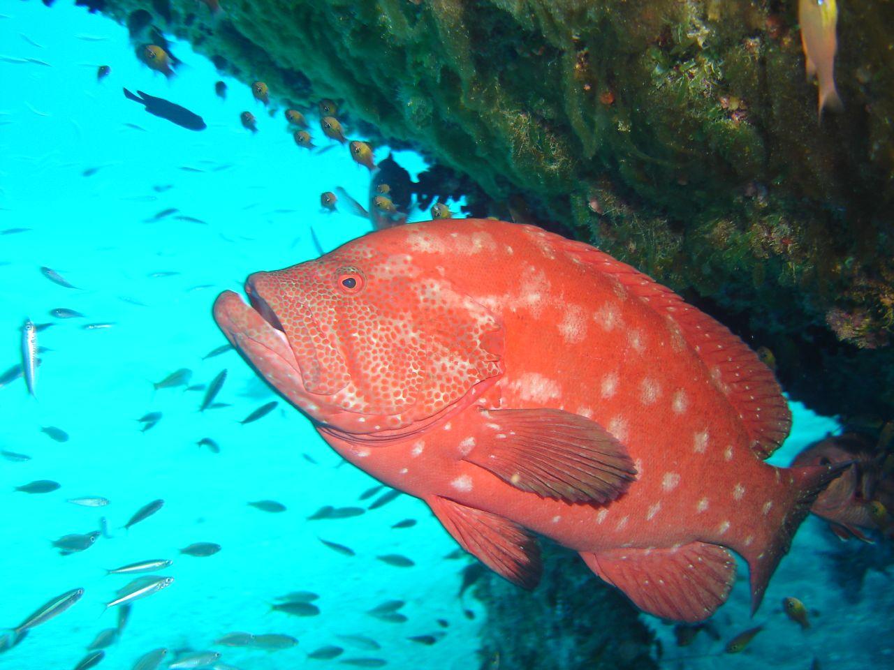 Go diving in Mauritius
