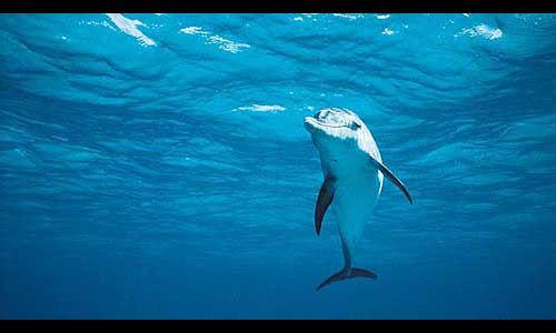Go dolphin-watching in Tonga