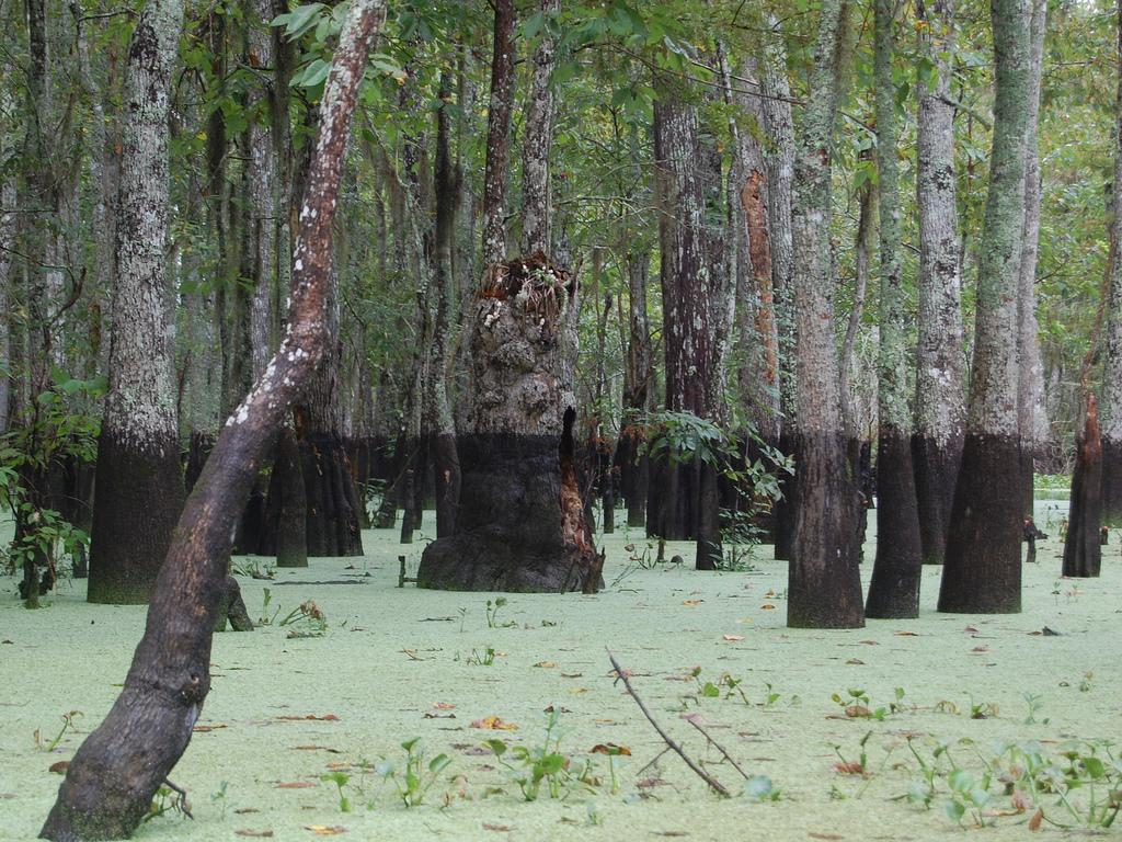 Honey Island swamp in Louisiana