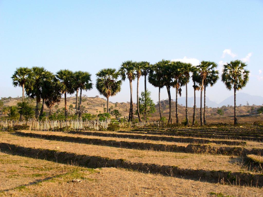 Osolata, East Timor