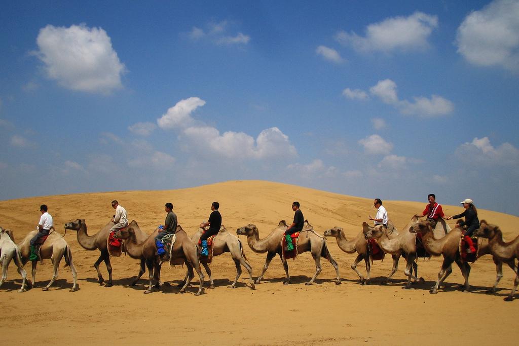 Camel trekking in inner Mongolia