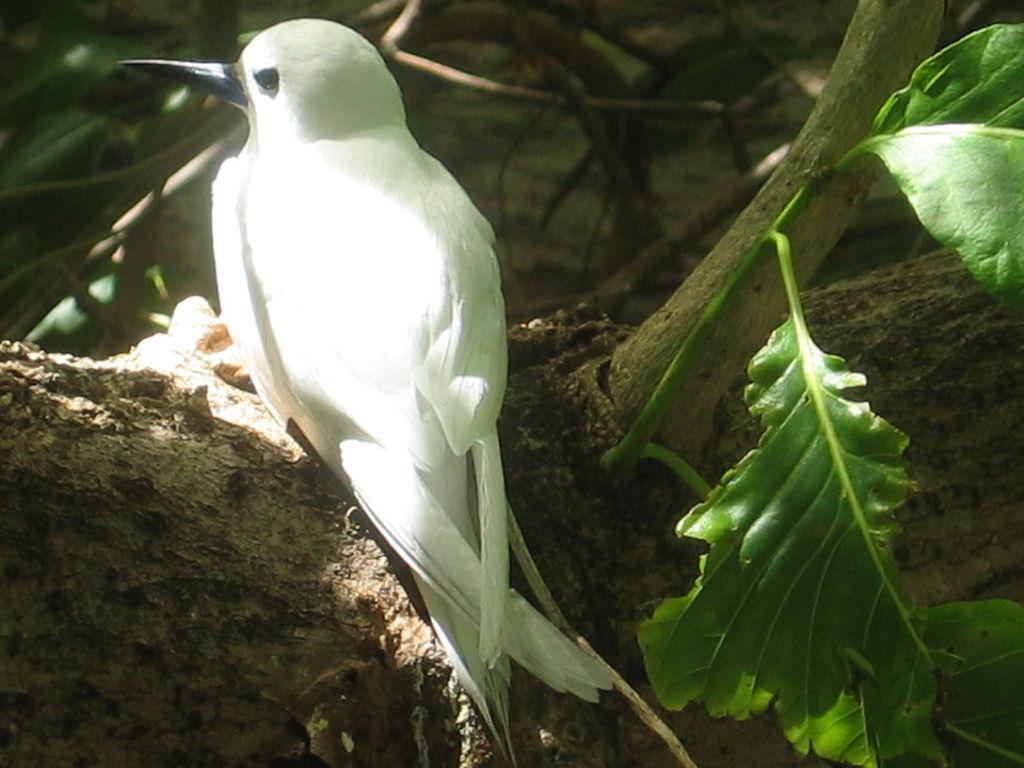 Bird-watching in Seychelles