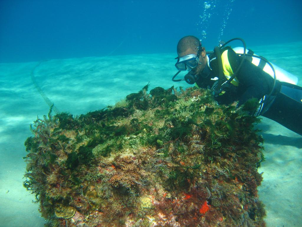 Enjoy St Lucia's unspoilt reefs