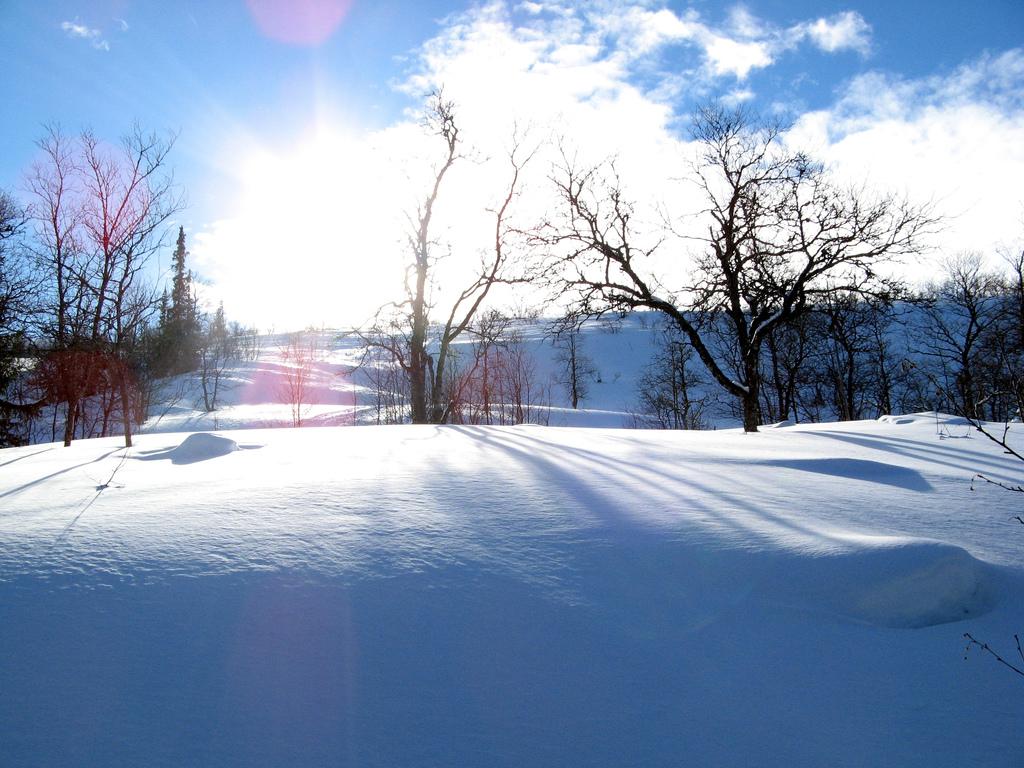 Enjoy snowshoeing across unspoilt wildnerness in Sweden
