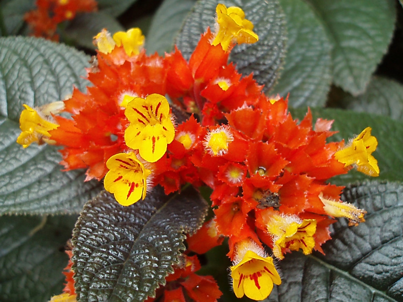 St Lucia's Diamond Botanical Garden