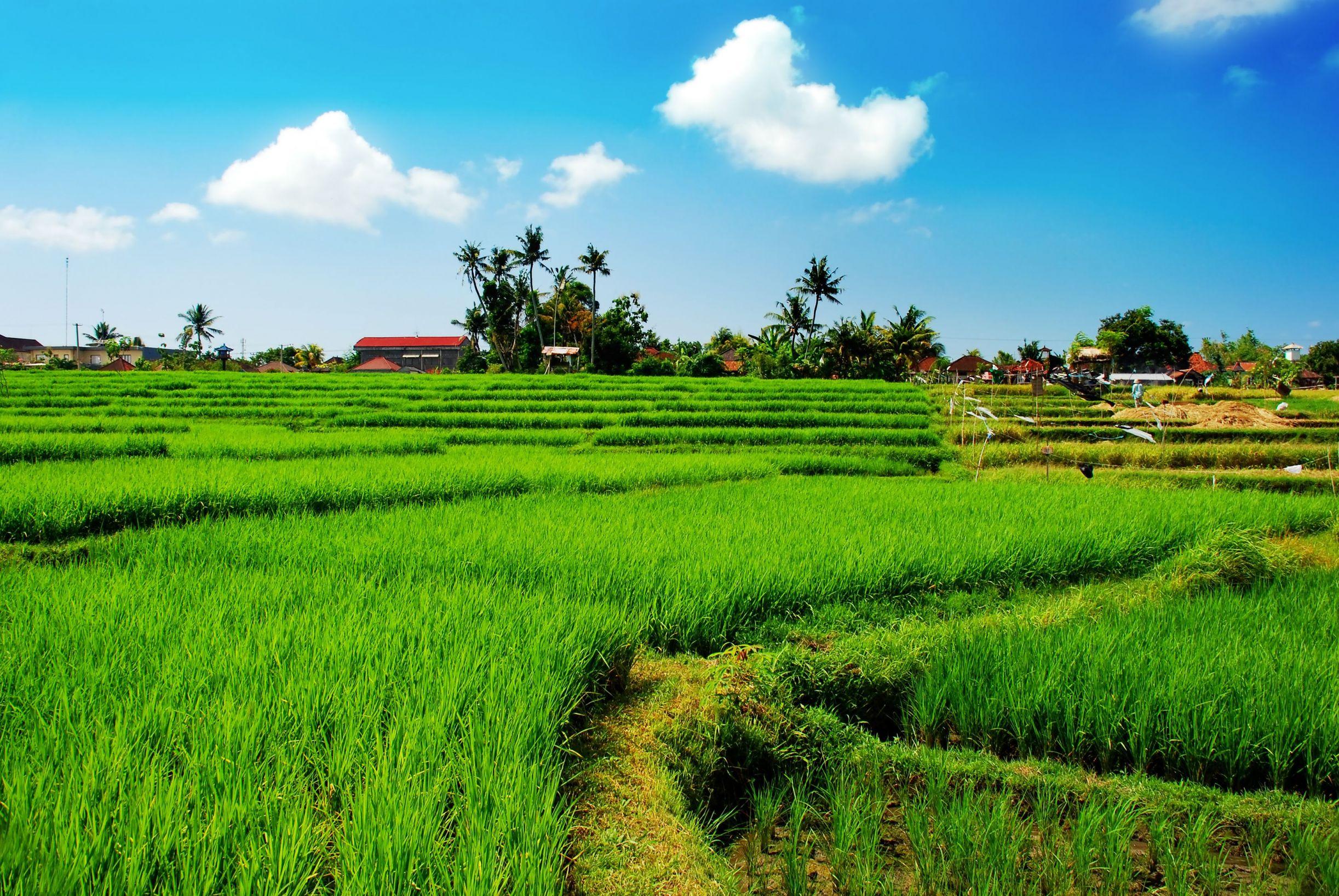 Paddy fields, Laos