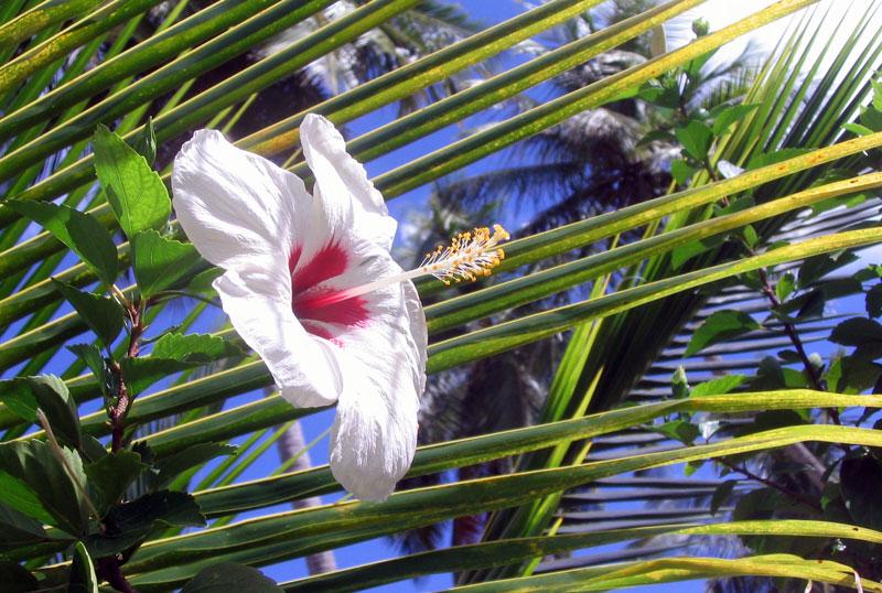 Flower, Tobago