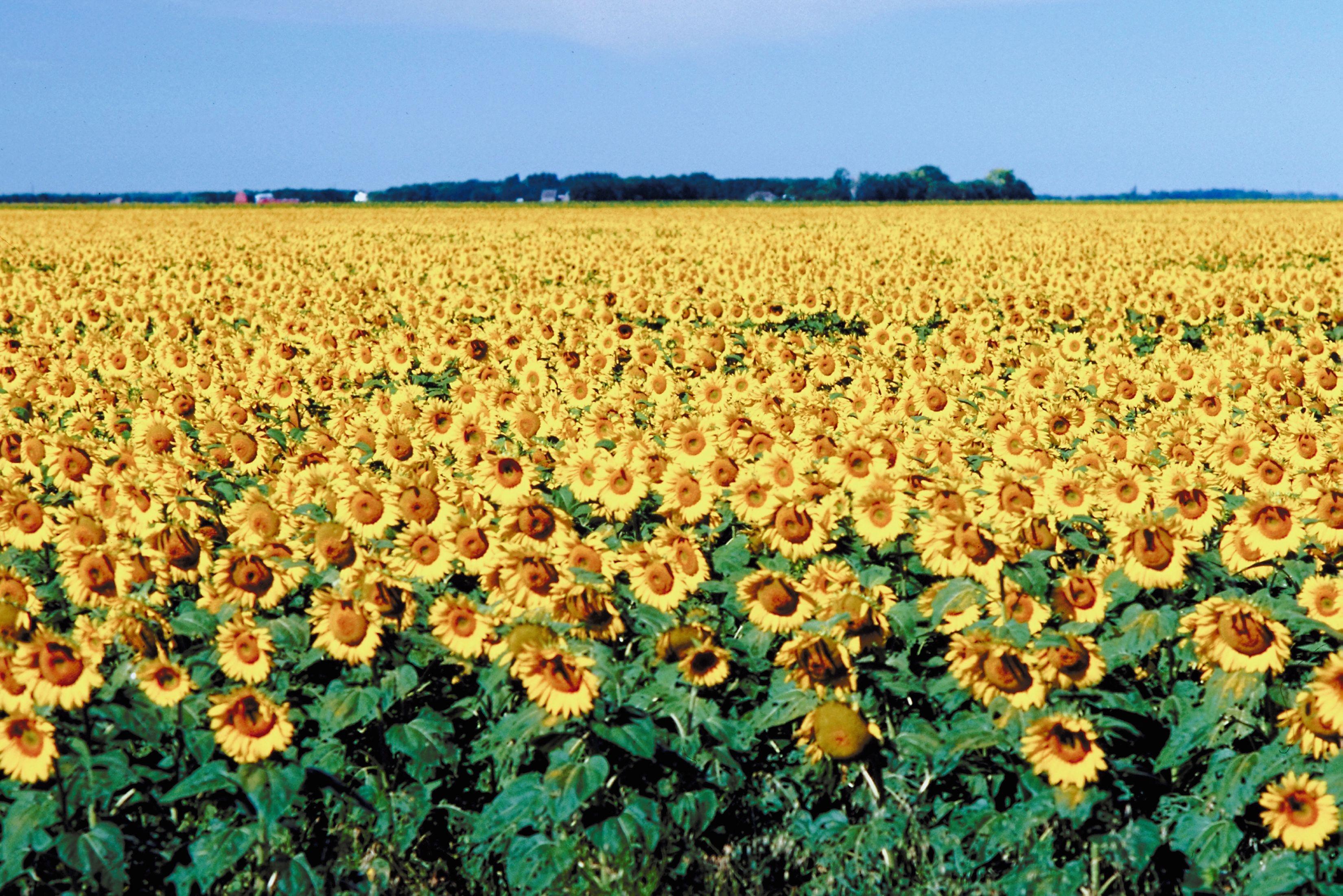 Manitoba countryside
