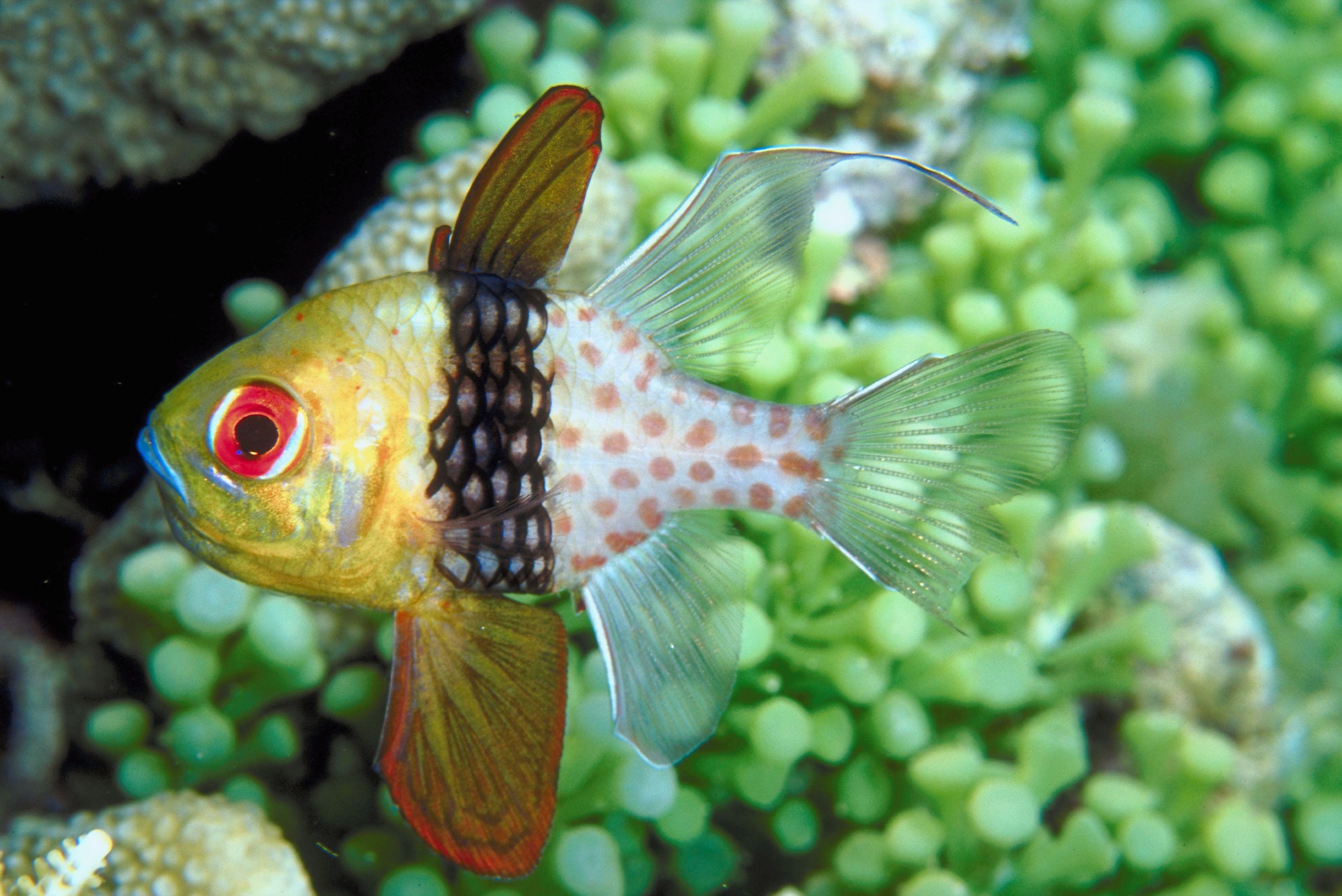 Explore fish life in Palau