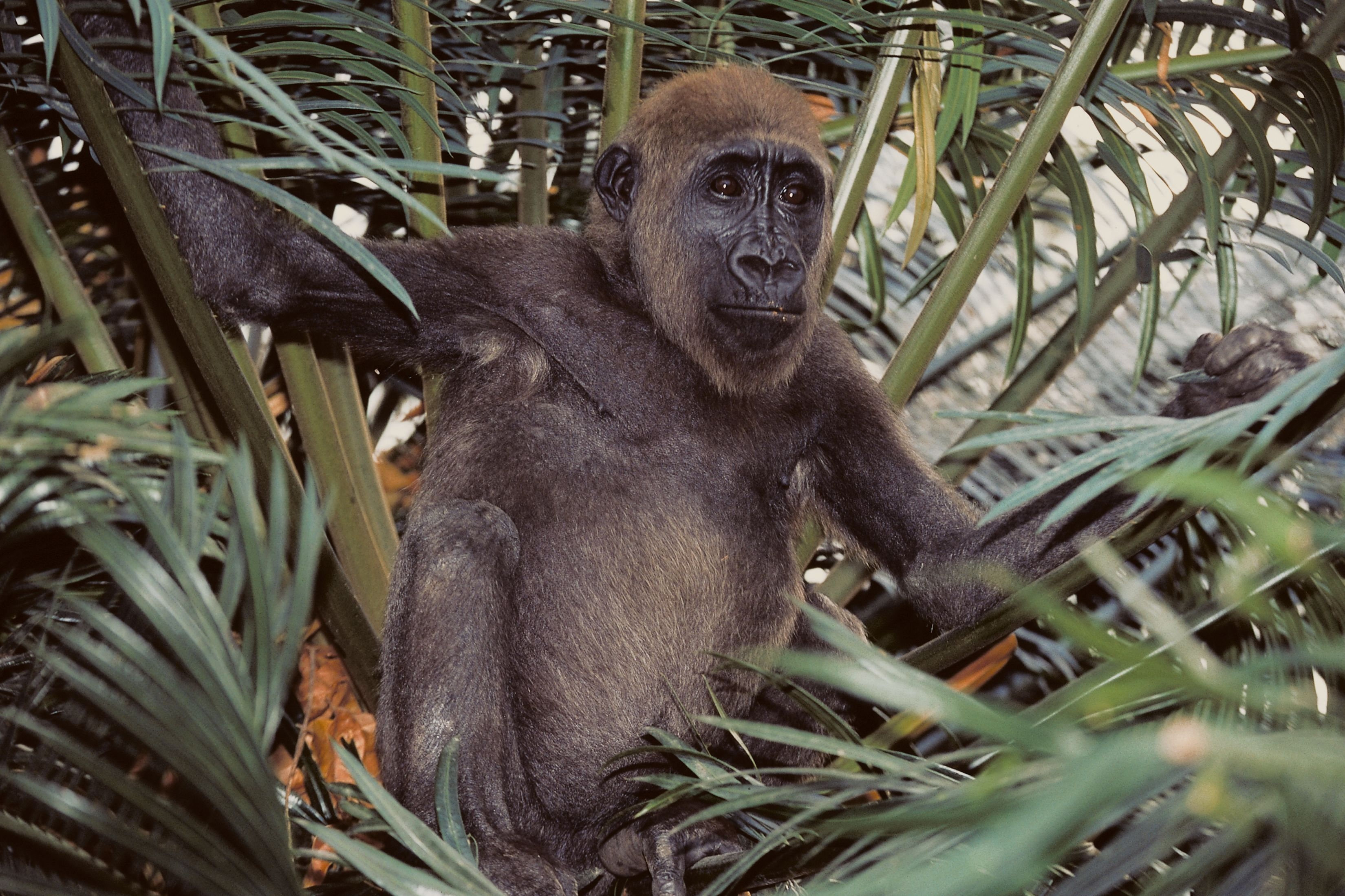 Cameroon is wildlife rich