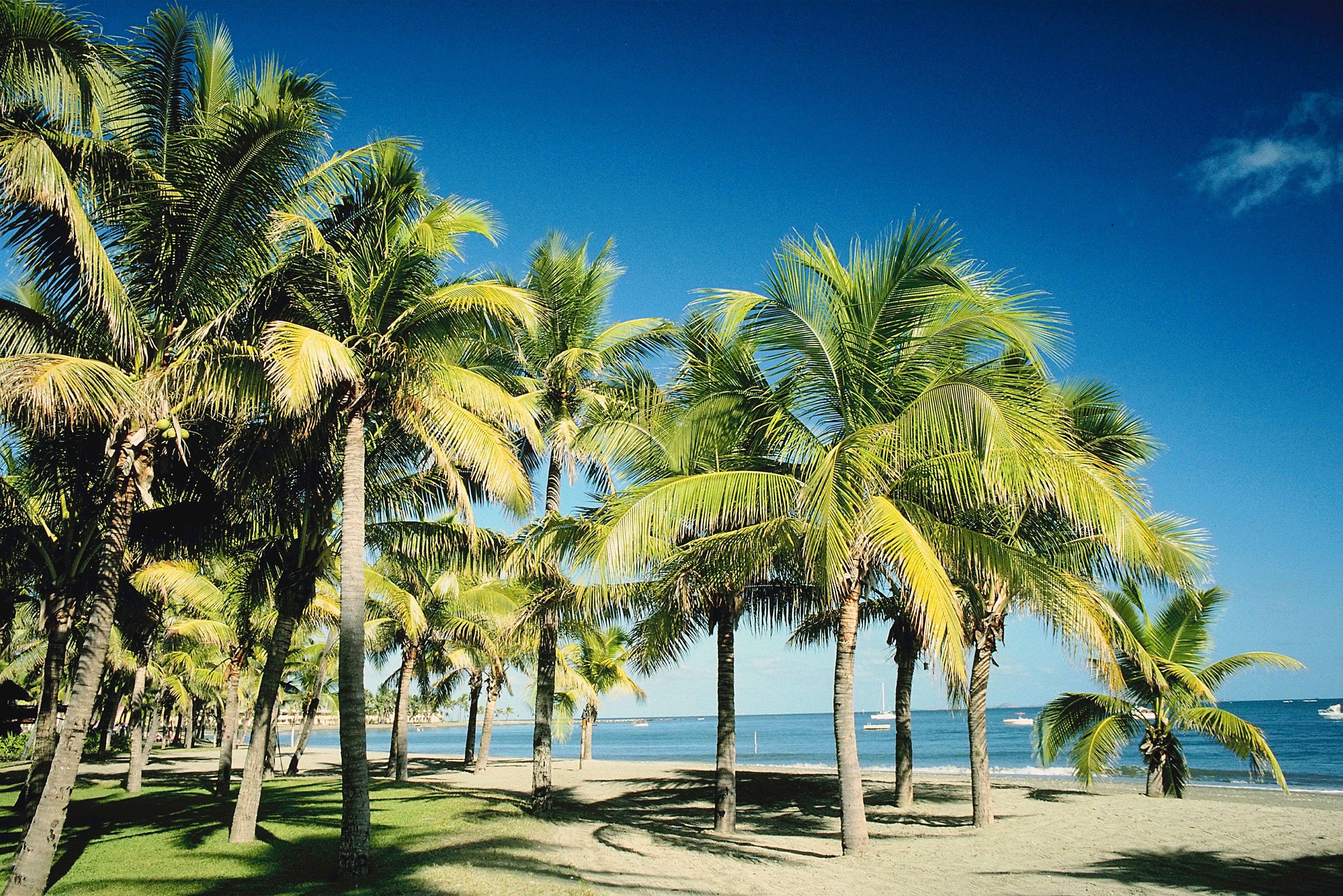 Tropical beach, Viti Levu Island, Fiji
