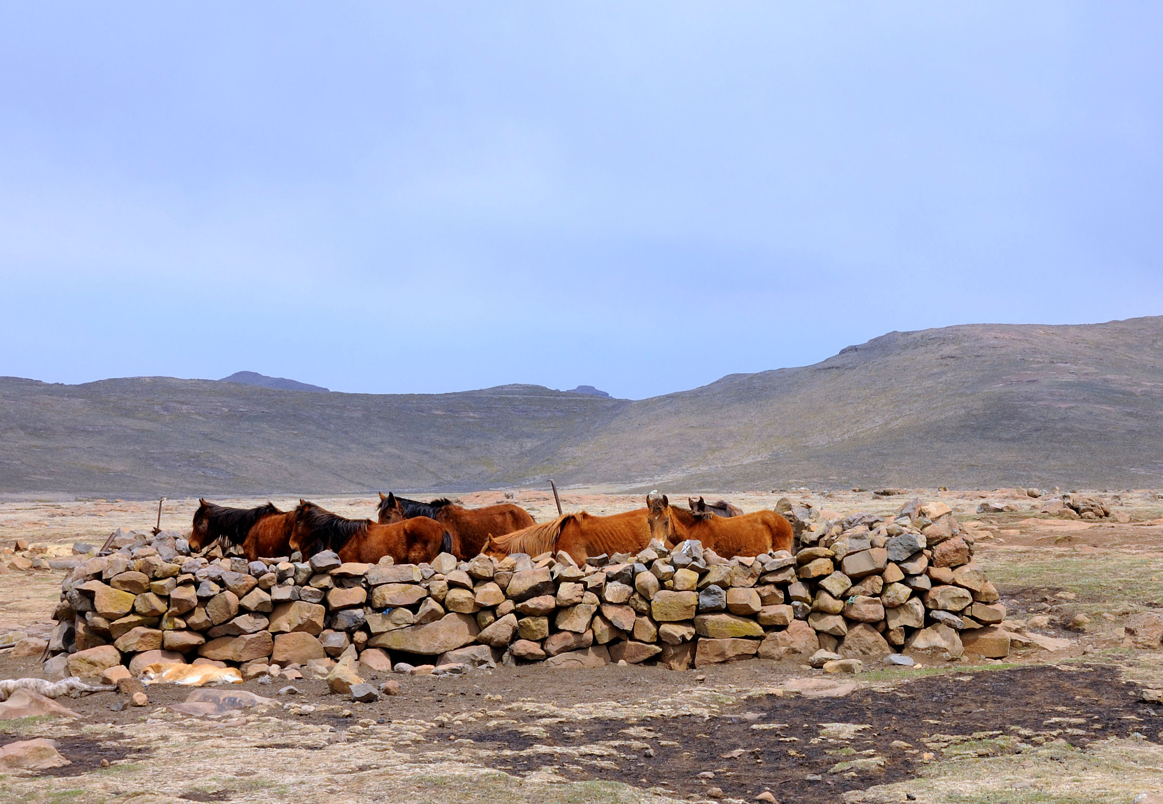Stone corral and horses in Lesotho