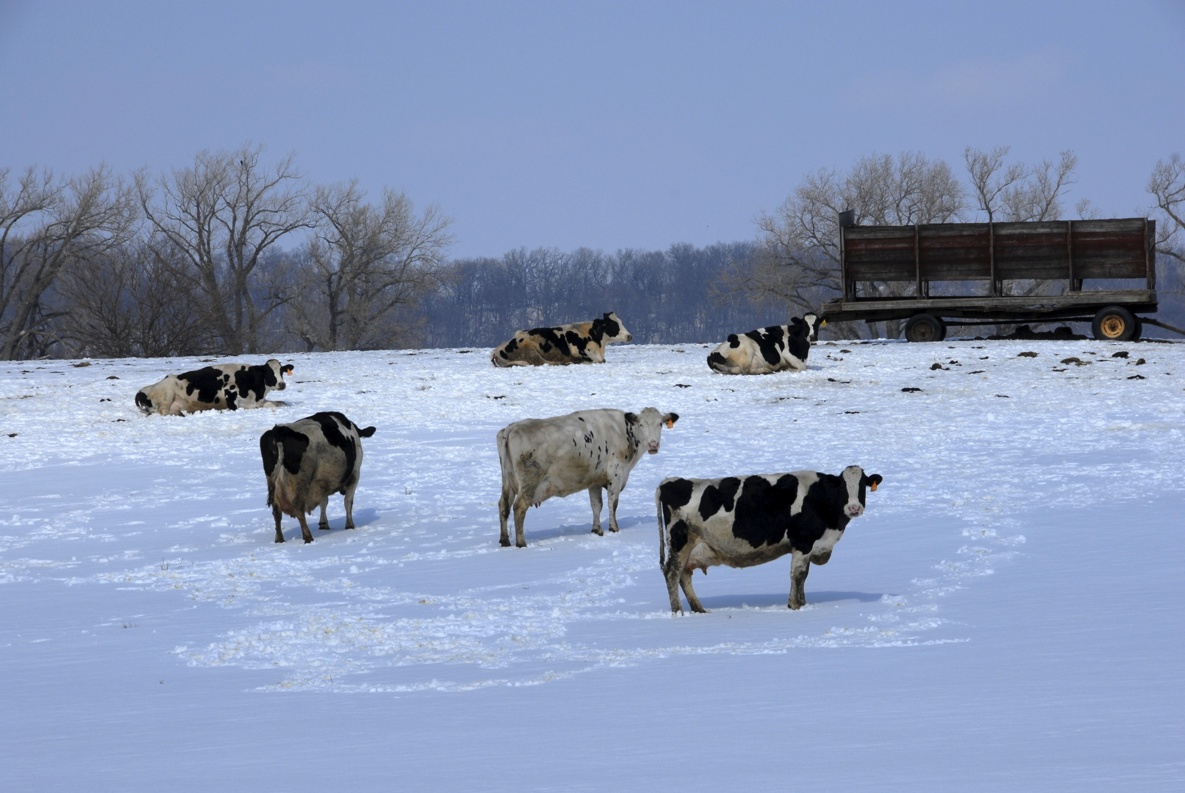 Wisconsin is known as the Dairy  State for its quality milks and cheeses