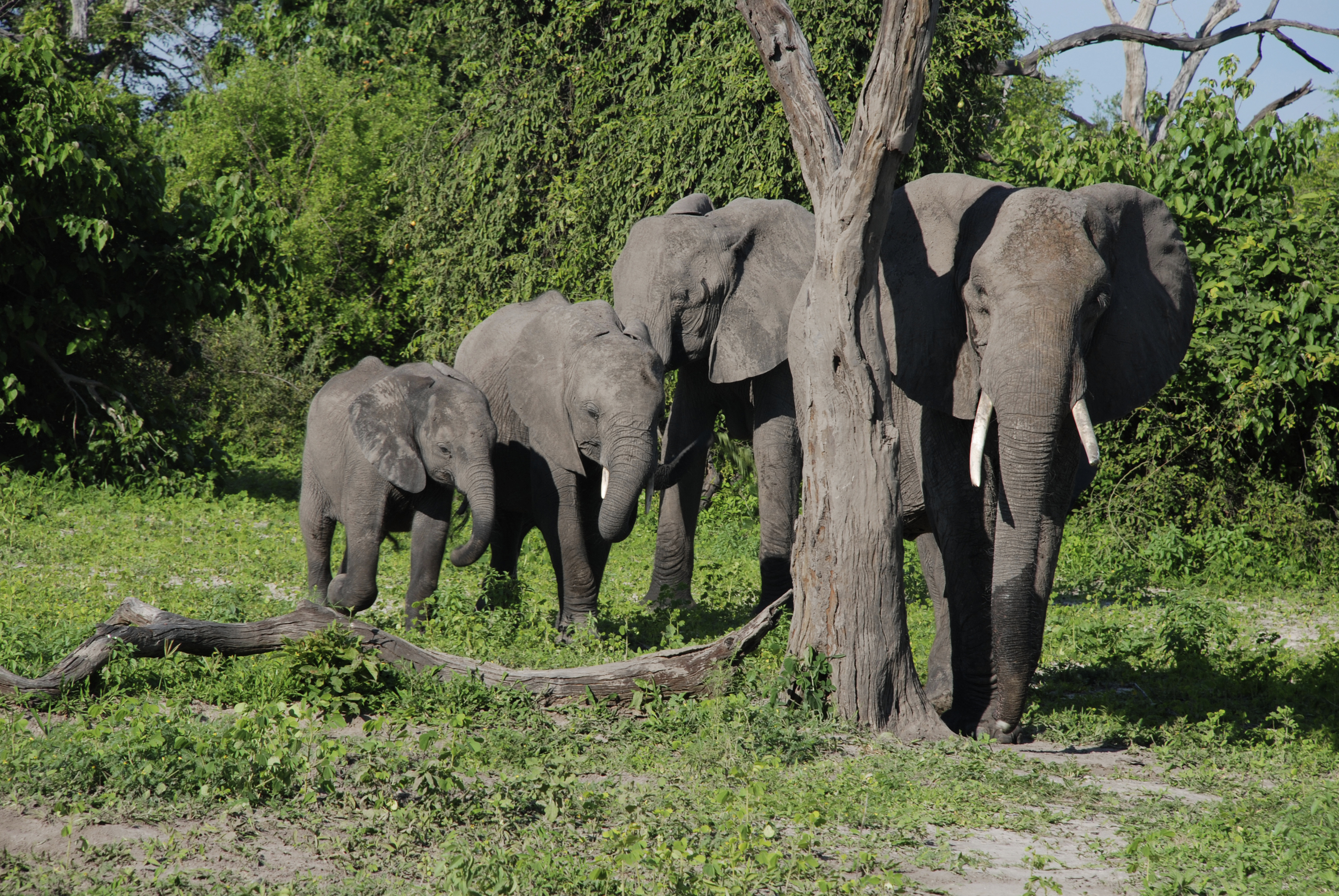 Zambia is well regarded for its safarri tours