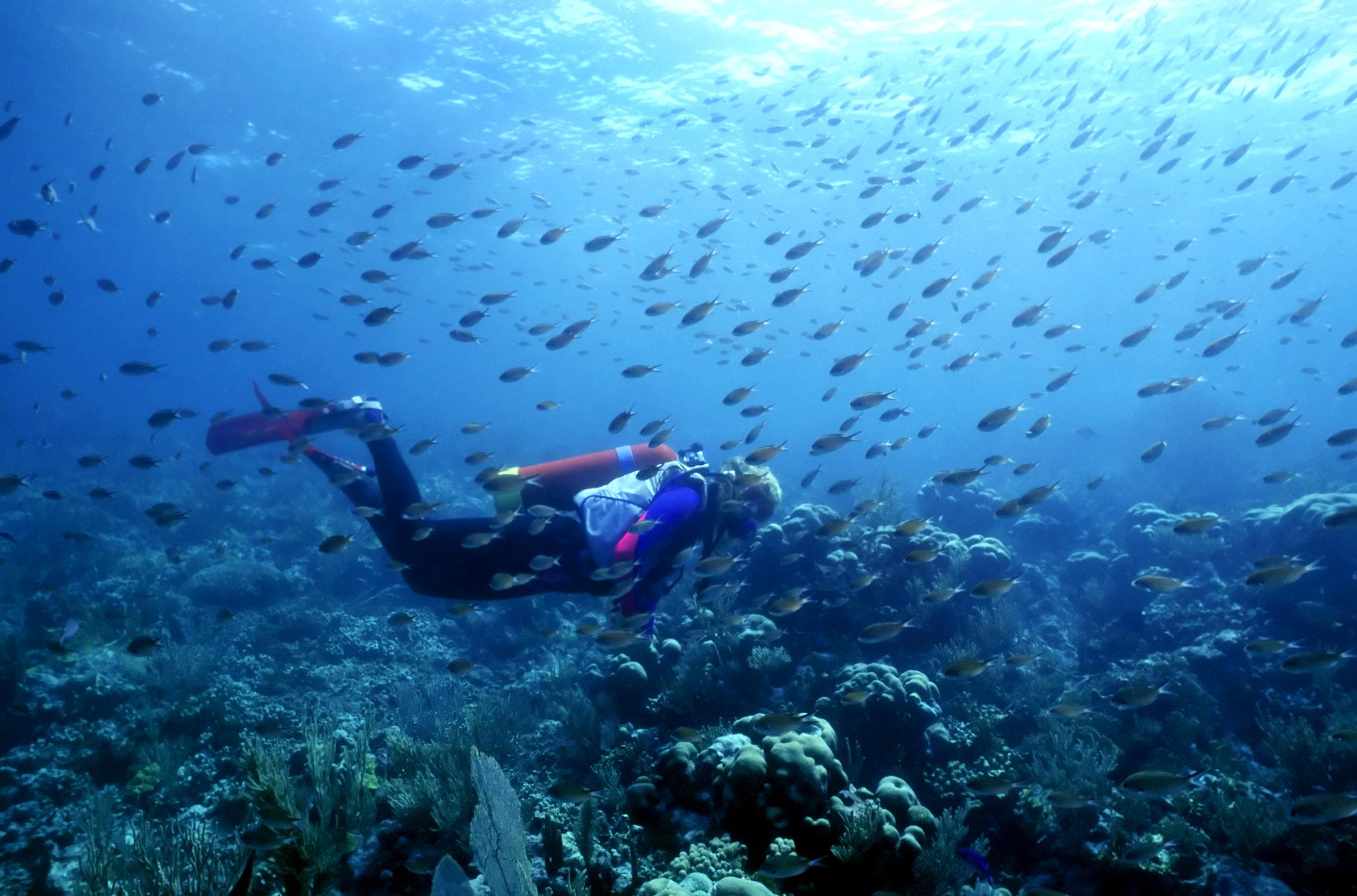 Fantastic diving in St Vincent