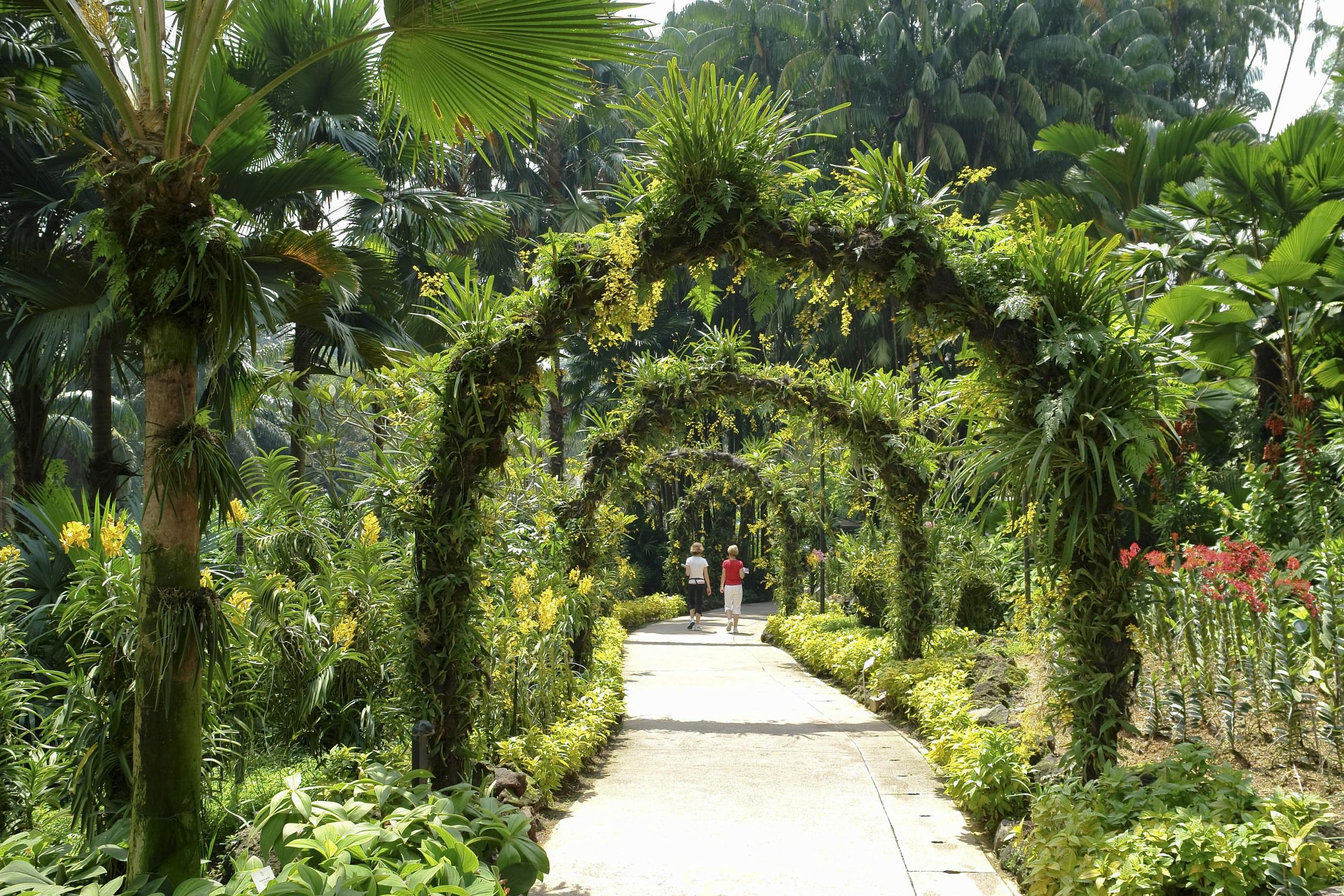 Take a stroll through Singapore's Orchid Gardens Walk.