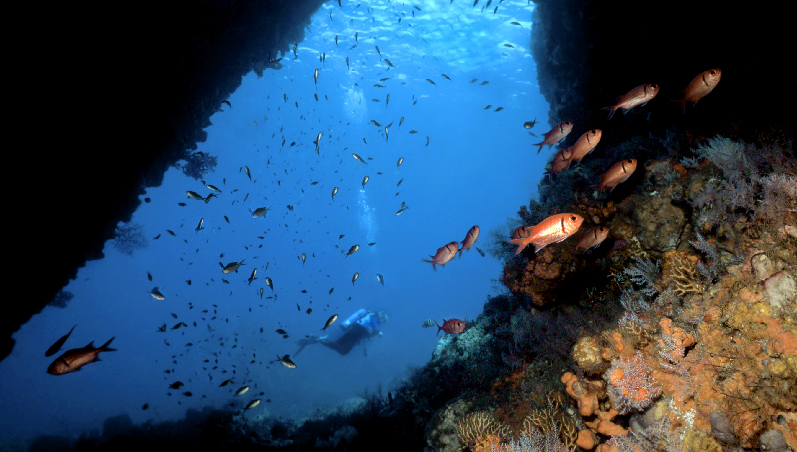 Scottshead Pinacle, a perfect diving spot near Dominica